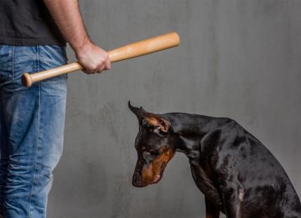 Avocat droit du chien Paris