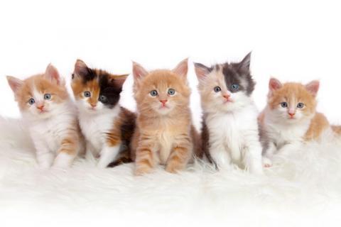 Avocat contrat vente chat paris
