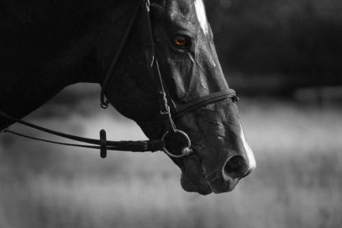 Contrat vente cheval Paris